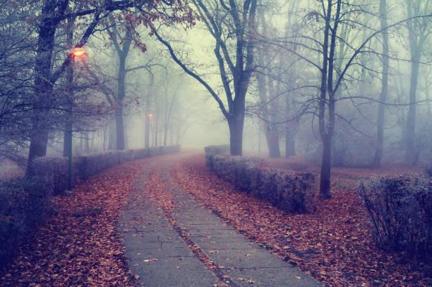 Walkway through the misty park in autumn.:スマホ壁紙(壁紙.com)
