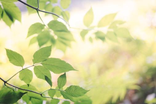 画像加工フィルタ「緑の葉に光輝く背景をぼかした」:スマホ壁紙(6)