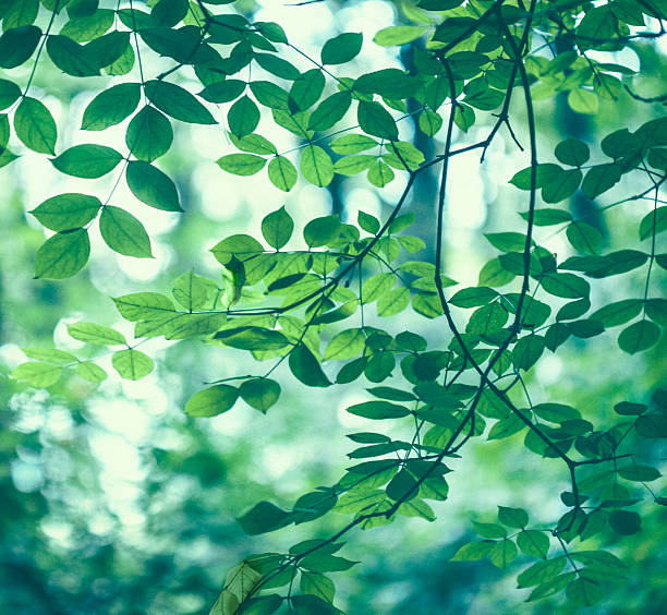 Green leaves background:スマホ壁紙(壁紙.com)