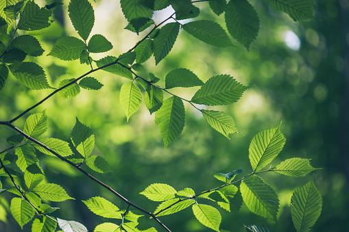 Tree「Green leaves background」:スマホ壁紙(3)