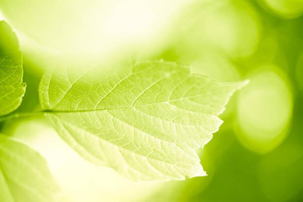 Green leaves:スマホ壁紙(壁紙.com)