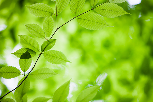 Branch「緑の葉」:スマホ壁紙(15)