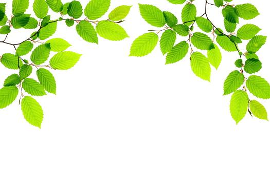 Springtime「春の葉」:スマホ壁紙(7)