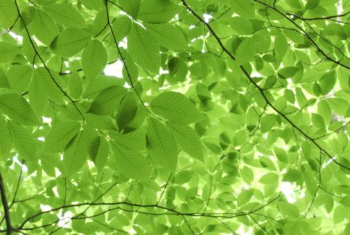 Nikko City「Green leaves on a tree」:スマホ壁紙(6)