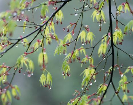 Nikko City「Green Leaves」:スマホ壁紙(8)
