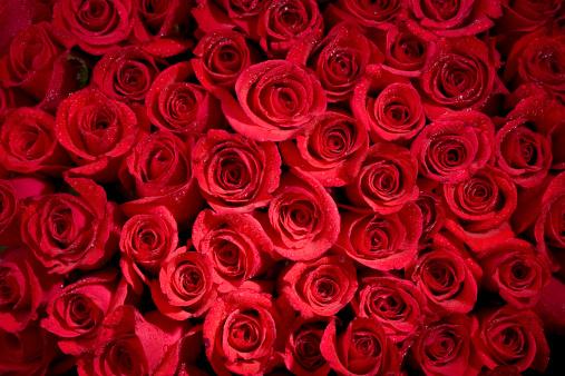 バレンタイン「Misty Rose の背景」:スマホ壁紙(15)