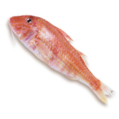 自生「Goatfish, elevated view」:スマホ壁紙(8)