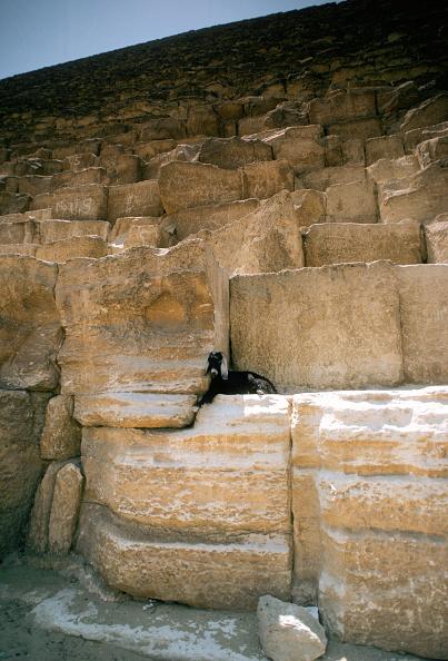 Hiding「Goat on the Great Pyramid, Egypt」:写真・画像(4)[壁紙.com]