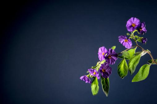 紫「Purple flowers have begun to fade」:スマホ壁紙(5)