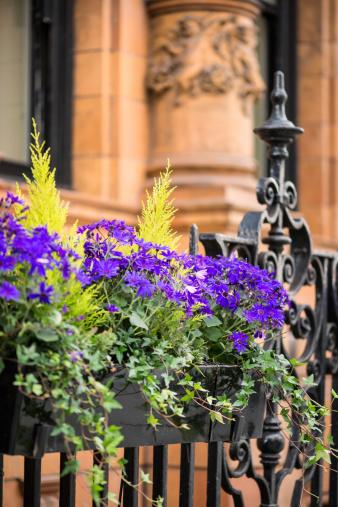 19th Century「Purple Flowers in Planter Box Outside Office Building」:スマホ壁紙(3)