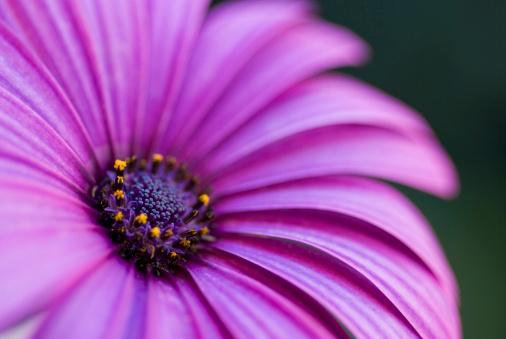 Floral Pattern「Purple flower」:スマホ壁紙(6)