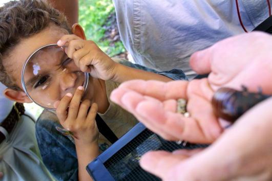 ゴキブリ「Bugs at Miami Metrozoo」:写真・画像(9)[壁紙.com]