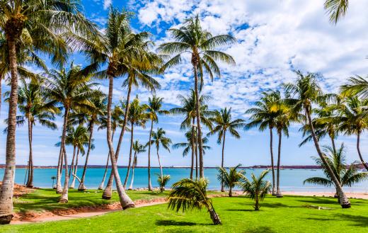 Grove「Palm grove at Hampton Harbour」:スマホ壁紙(19)
