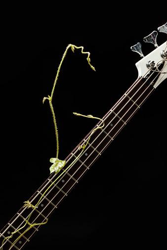 Bass Instrument「Creeper play  electric bass guitar」:スマホ壁紙(6)