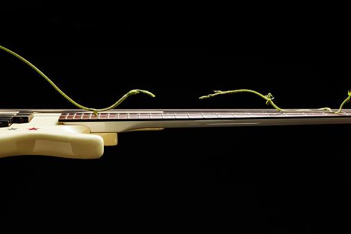 Guitar「Creeper play  electric bass guitar」:スマホ壁紙(12)