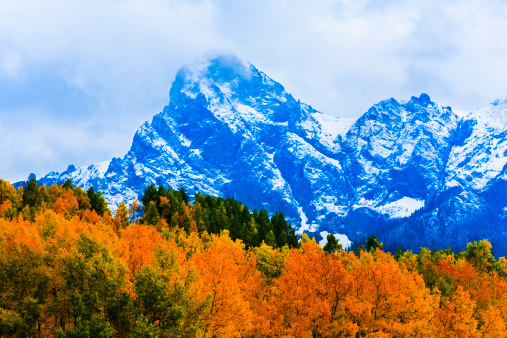 Aspen Tree「Colorado autumn foliage and snow-capped mountains」:スマホ壁紙(11)