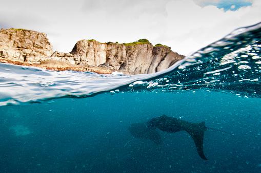 Manta「The Undersea World of Komodo.」:スマホ壁紙(8)