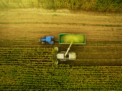 Harvesting「Corn harvesting with agriculture vehicles」:スマホ壁紙(3)
