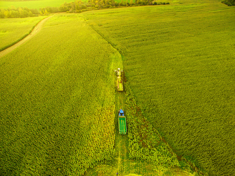 Tractor「Corn harvesting with agriculture vehicles」:スマホ壁紙(4)