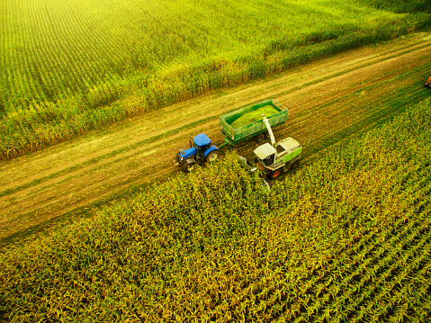 Crop - Plant「Corn harvesting with agriculture vehicles」:スマホ壁紙(3)
