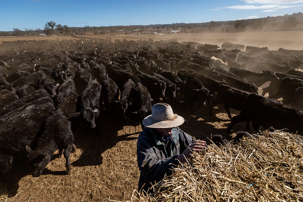 New South Wales「New South Wales Farmers Battle Crippling Drought」:写真・画像(3)[壁紙.com]