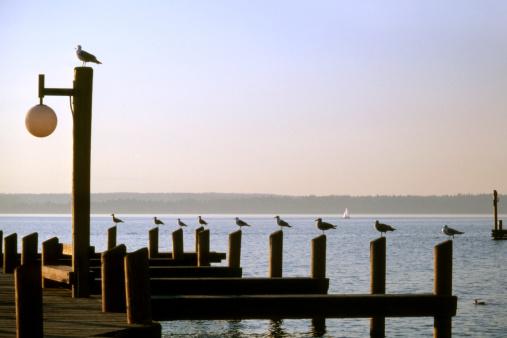 Seagull「Seagull enjoying evening sunlight」:スマホ壁紙(6)