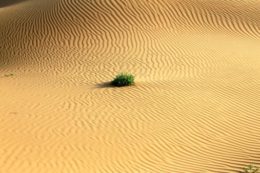 アウバリ砂海「Desert in Inner Mongolia」:スマホ壁紙(16)