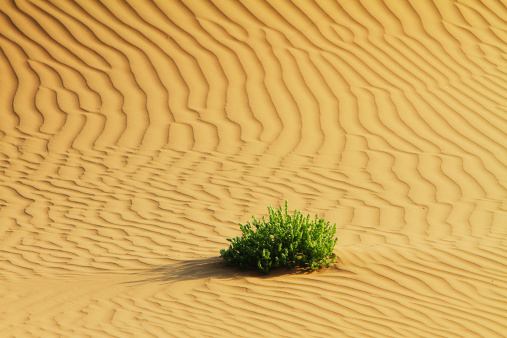 アウバリ砂海「Desert in Inner Mongolia」:スマホ壁紙(2)