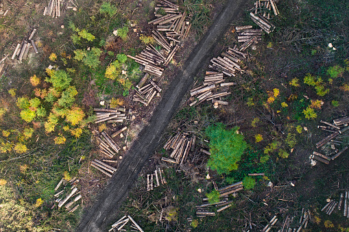 Lumber Industry「Forest, deforestation area - aerial view」:スマホ壁紙(2)