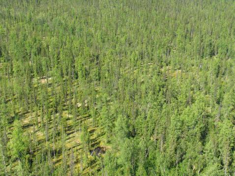 Boreal Forest「Siberian taiga - aerial view」:スマホ壁紙(8)