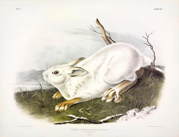 Archaeology「Northern Hare」:写真・画像(14)[壁紙.com]
