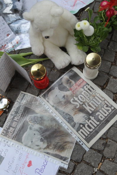 Condiment「Knut Fans Protest Possible Stuffing Of Knut Body」:写真・画像(2)[壁紙.com]