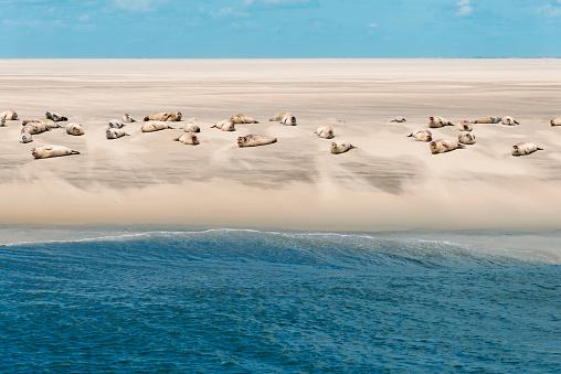 Water Lily「Seals at the North Sea」:スマホ壁紙(3)