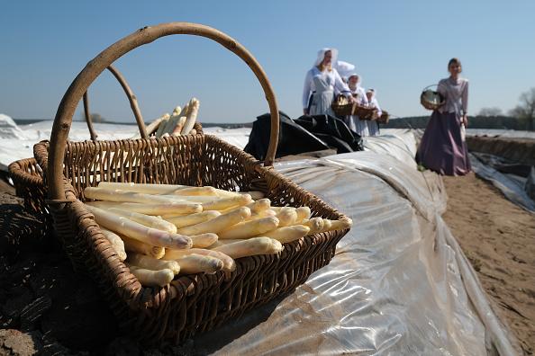 Asparagus「Asparagus Season Underway In Beelitz Region」:写真・画像(9)[壁紙.com]