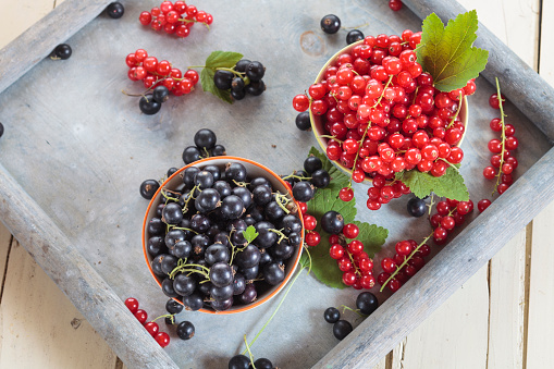 Black currant「Two bowls of red and black currants on a tray」:スマホ壁紙(16)