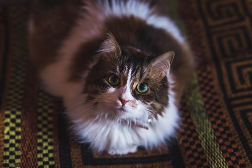Green Eyes「Angry cat」:スマホ壁紙(17)