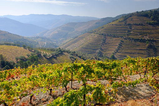 UNESCO「Terraced Vineyards and rolling Hills of Douro Valley」:スマホ壁紙(1)