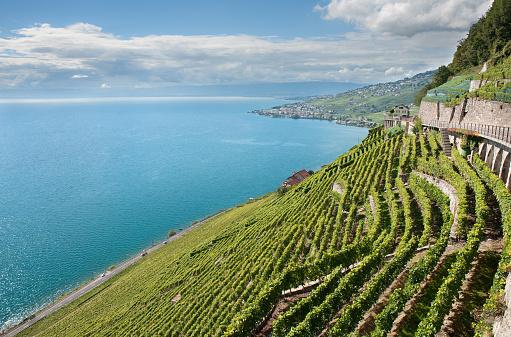 Steep「Terraced Vineyards of Lavaux Wine Region」:スマホ壁紙(0)