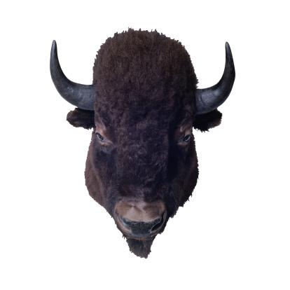 イエローキャブ「Buffalo Head」:スマホ壁紙(18)