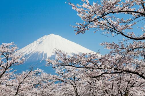 Cherry Blossoms「Mount Fuji & Cherry Blossoms」:スマホ壁紙(7)