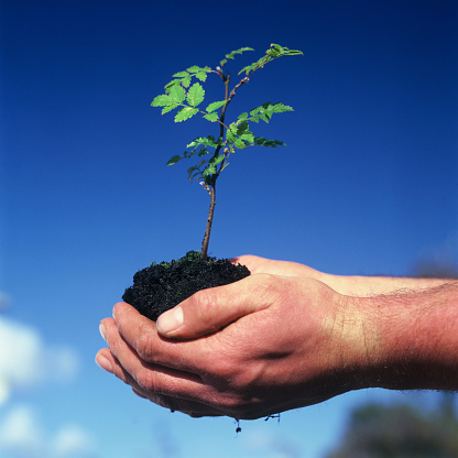 Isle of Man「A man's cupped hands holding soil and a sapling green leafed tree」:スマホ壁紙(6)