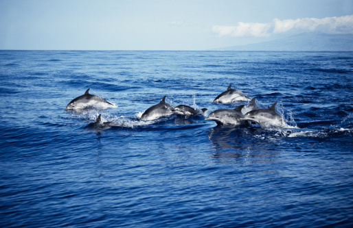 Carefree「atlantic spotted dolphin,stenella frontalis, porpoising, azores, portugal」:スマホ壁紙(2)