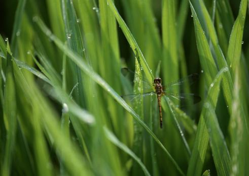 とんぼ「Dragonfly」:スマホ壁紙(17)