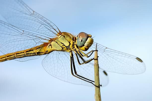 Dragonfly:スマホ壁紙(壁紙.com)