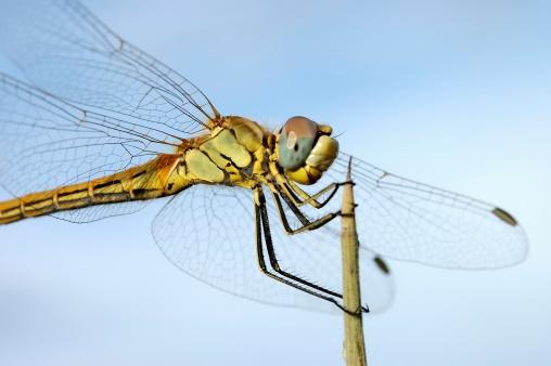 Dragonfly「Dragonfly」:スマホ壁紙(0)