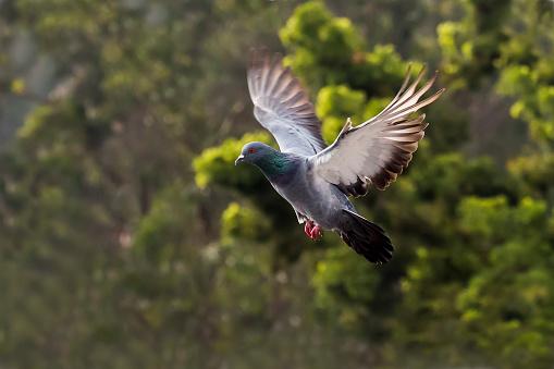 Dethan Punalur「Pigeon flying」:スマホ壁紙(15)
