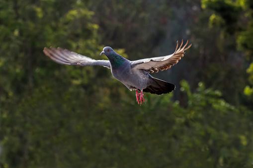 Dethan Punalur「Pigeon flying」:スマホ壁紙(16)