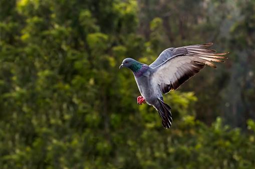 Dethan Punalur「Pigeon flying」:スマホ壁紙(14)