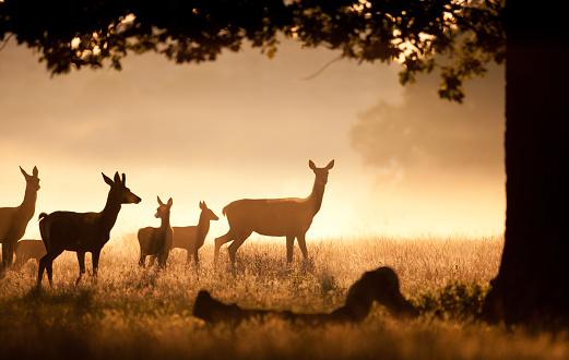 Doe「Deer Herd with fawns」:スマホ壁紙(11)