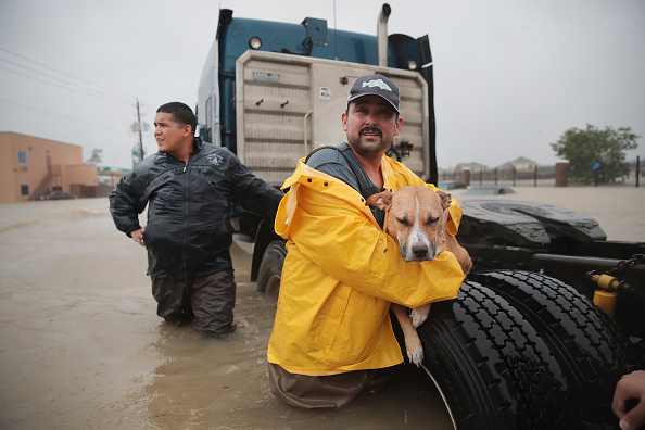 動物「Epic Flooding Inundates Houston After Hurricane Harvey」:写真・画像(2)[壁紙.com]